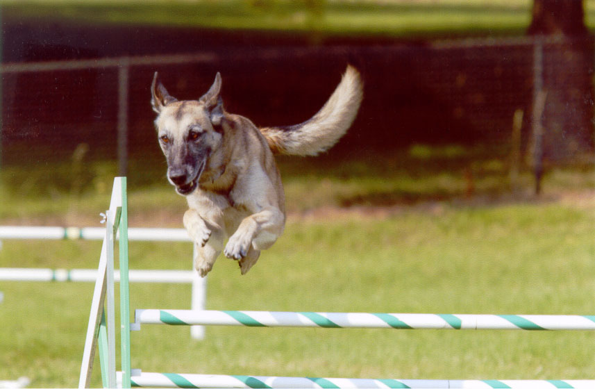 Ivy-Agility-over-Bar